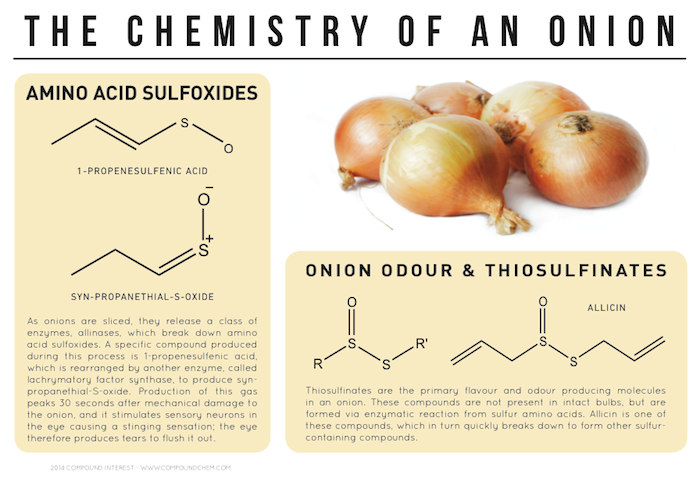 the effects of the salt water on onion cells in the chemistry Here we explain the chemistry of ocean water since a red blood cell has a salt the main exception is where freshwater is mixing with seawater river water.