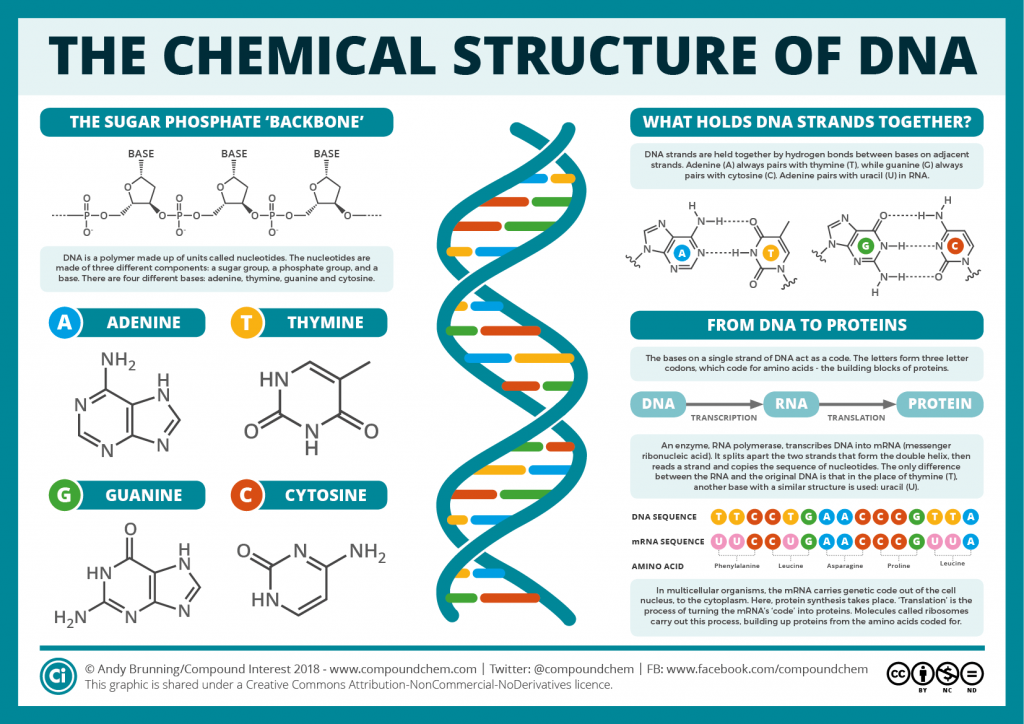 The Chemical Structures of DNA & RNA