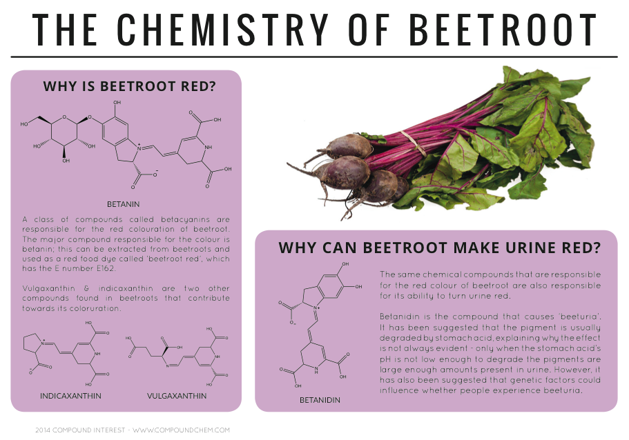 Effect of stress on beet cells
