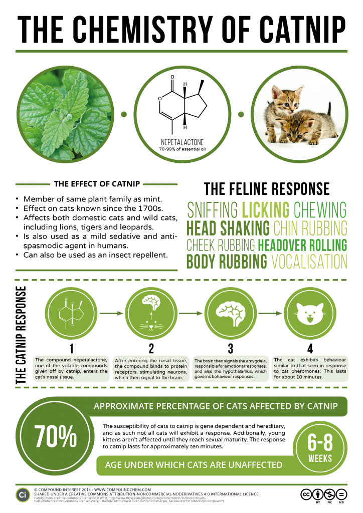 Chemistry of Catnip