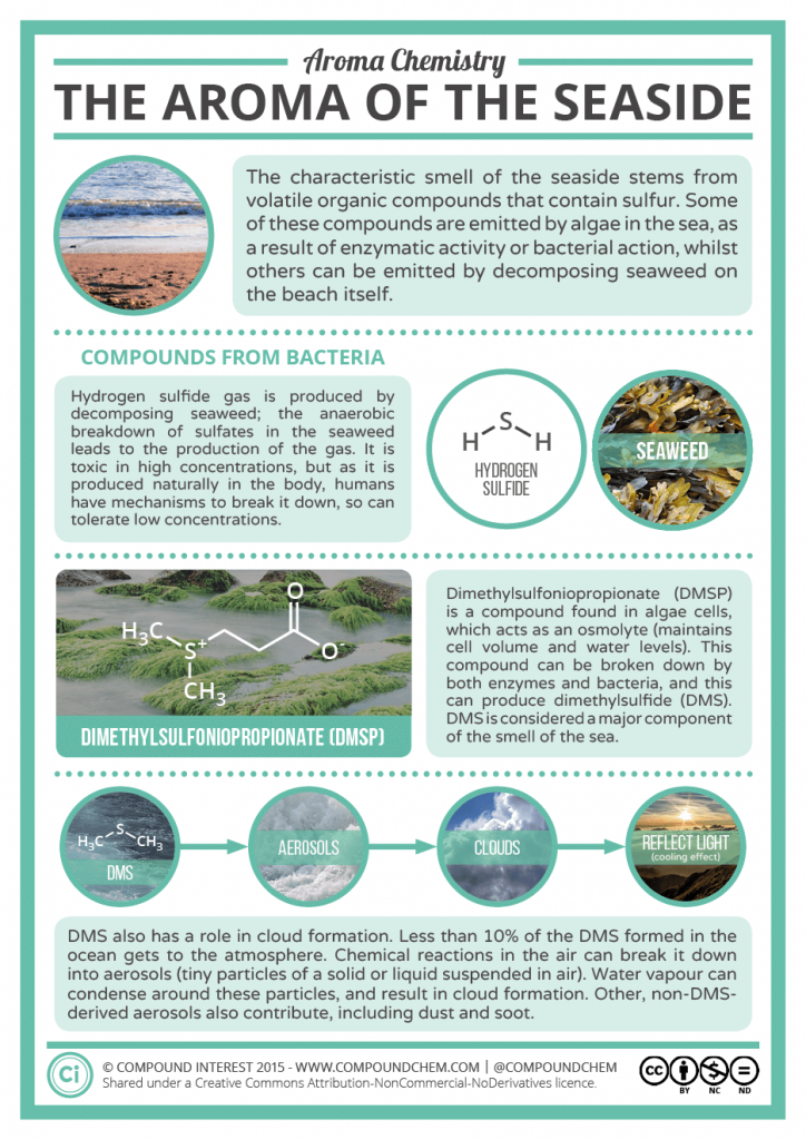 The Chemical Compounds Behind The Scent Of The Sea Compound Interest