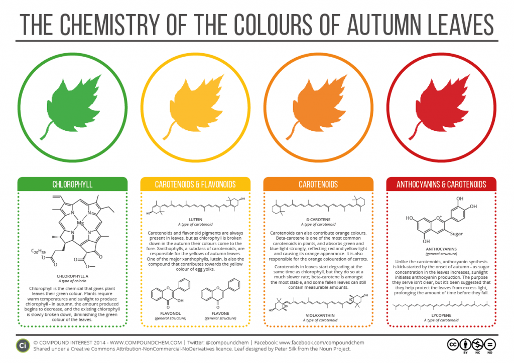 Chemistry of Autumn Leaves 2015