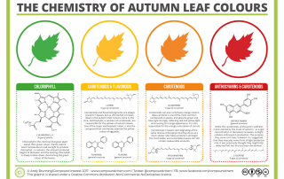 Chemistry of the colours of Autumn Leaves 2017
