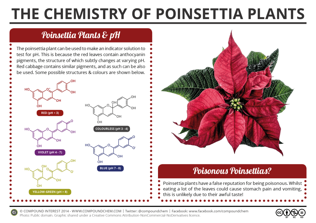 The Chemistry Of Poinsettia Plants Compound Interest