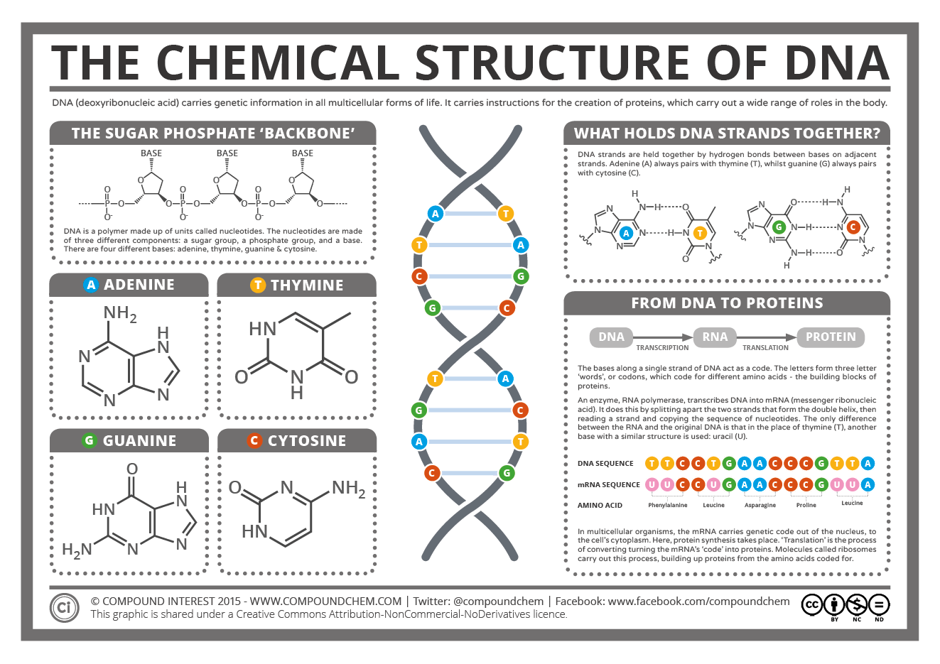 Compound Interest - The Chemical Structure of DNA