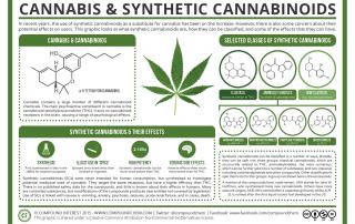 Cannabis & Synthetic Cannabinoids