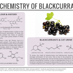 Blackcurrants & Cat Urine – The Chemistry of Blackcurrants
