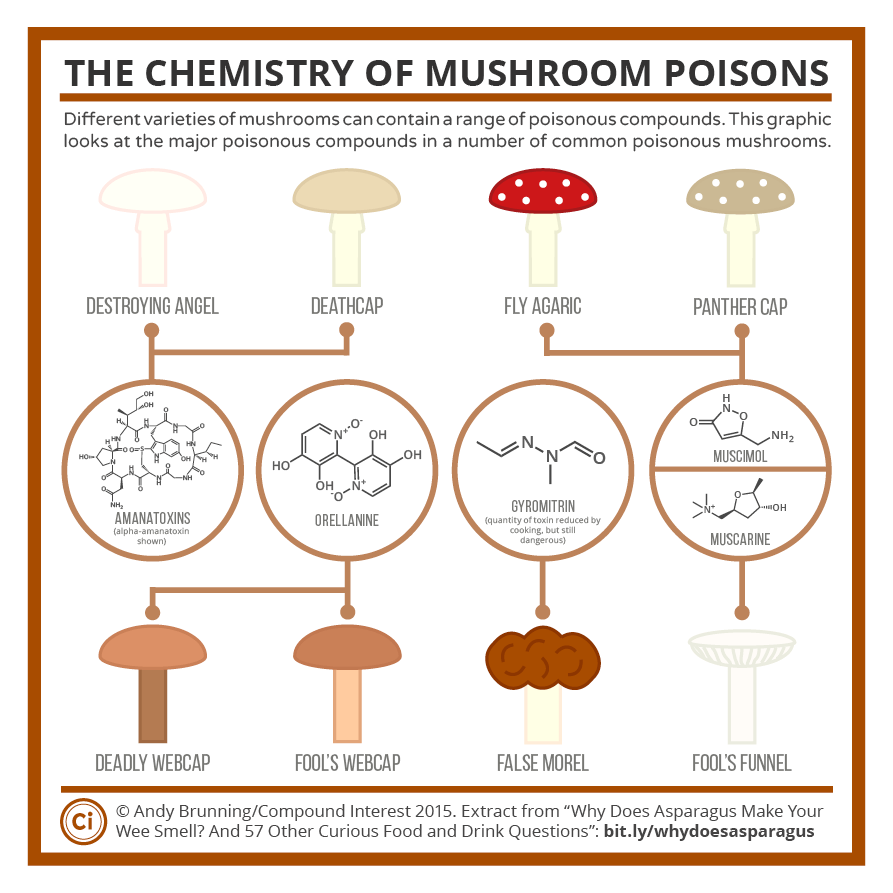 The Chemistry Of Poisonous Mushrooms Compound Interest