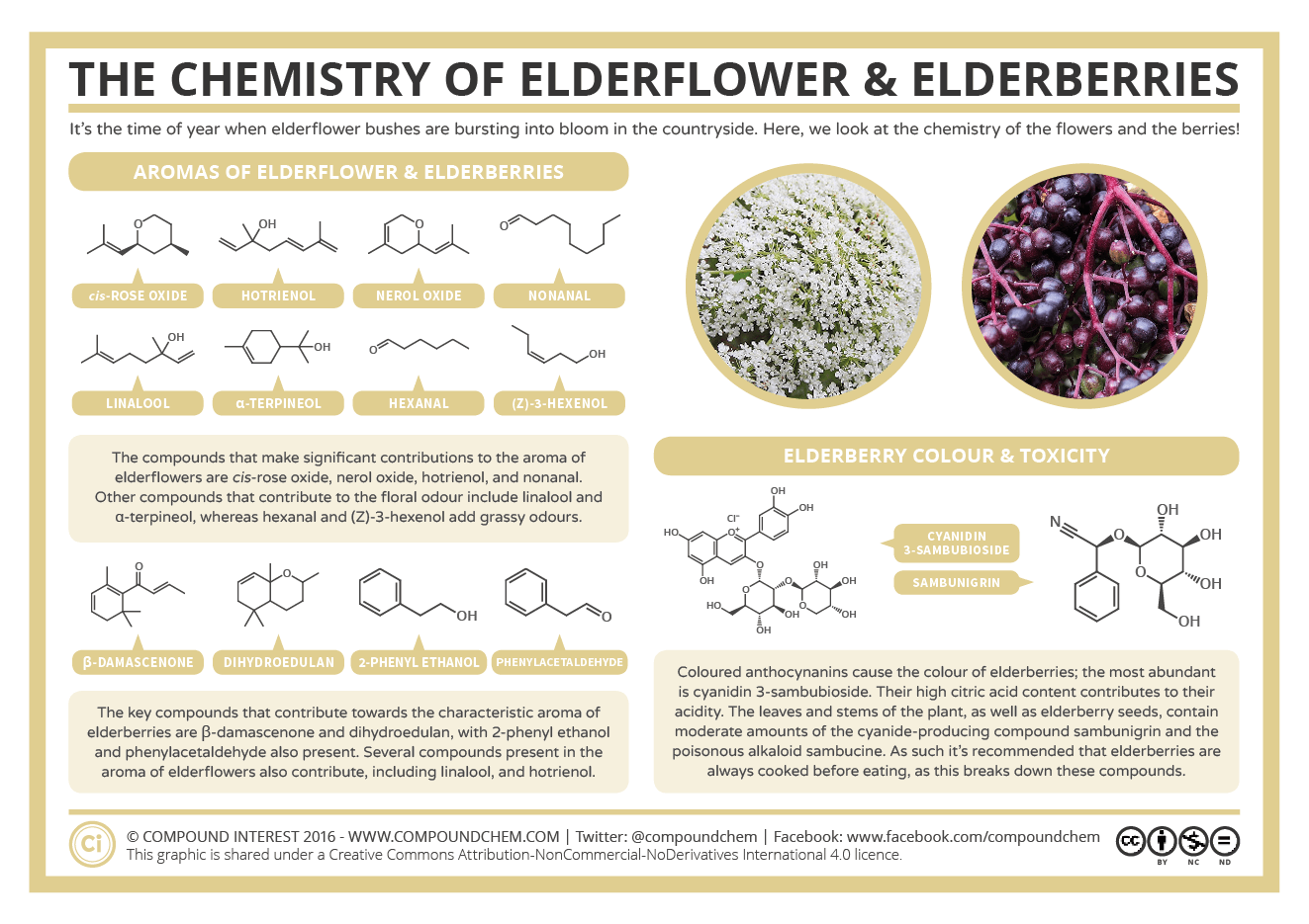 The Chemistry of Elderberries Infographic by CompoundChem.com