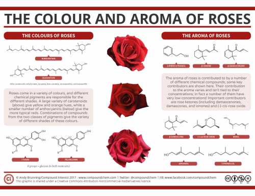 Valentine's Day Special: The Chemistry of Roses