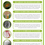 This Week in Chemistry – Fluorescent Frogs, and How Tardigrades Survive Dehydration