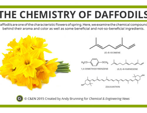 The Chemistry of Daffodils – in C&EN