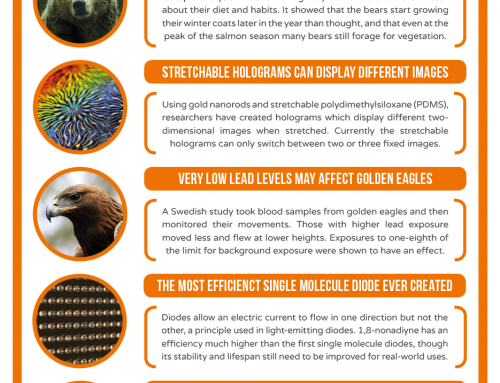 This Week in Chemistry – Bear Hair Diet Insights, and the Most Efficient Single Molecule Diode