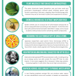 This Week in Chemistry – Plant Molecule Contraceptives, and How Orchids Attract Wasps