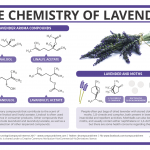 Why Can Lavender Be Used to Repel Moths? – The Chemistry of Lavender