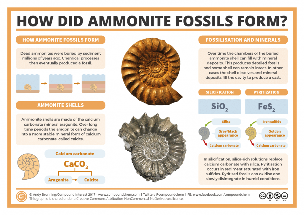 The Chemistry of Fossilisation