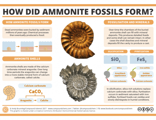How did ammonite fossils form?