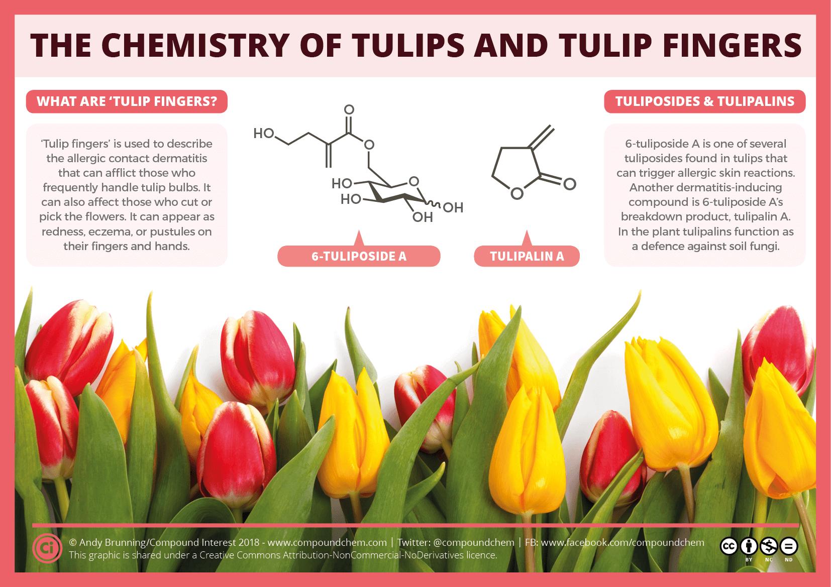 The chemistry of tulips and tulip fingers compound interest chemistry of tulips and tulip fingers izmirmasajfo