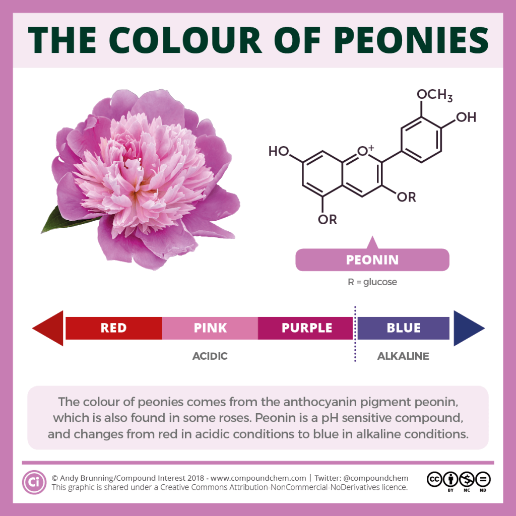 Peonies and peonin