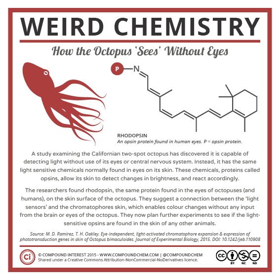 Weird Chemistry #17 - How Octopuses Sees Without Eyes.png
