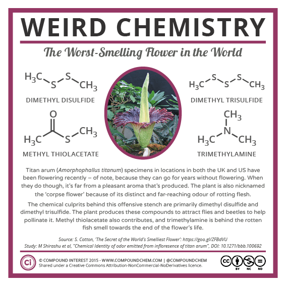 Weird Chemistry #21 - The Smell of the Corpse Flower