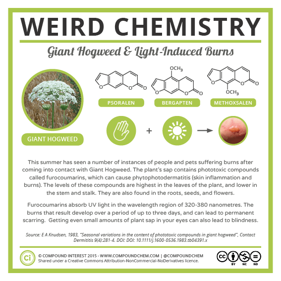 Weird Chemistry #22 - Giant Hogweed Phototoxicity