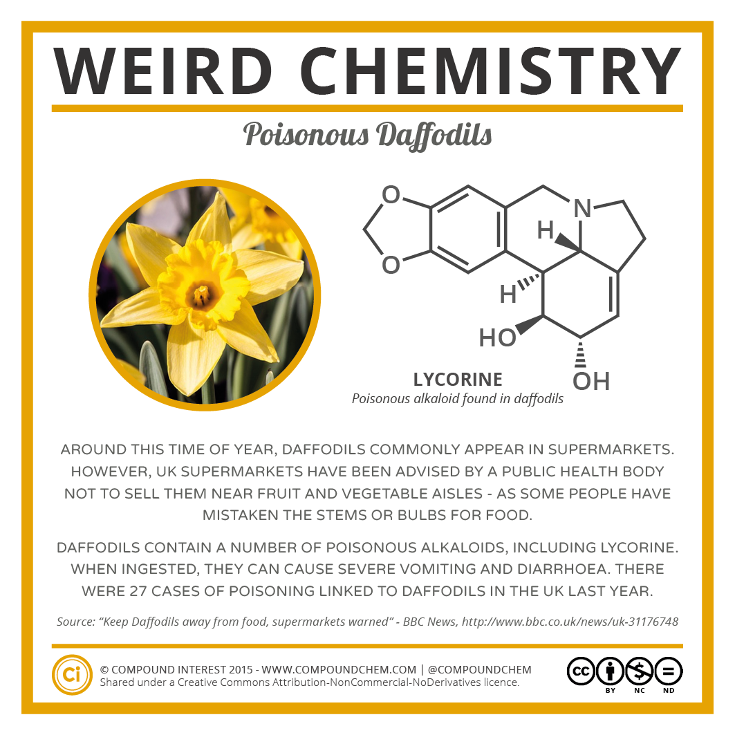 Weird Chemistry #5 - Poisonous Daffodils