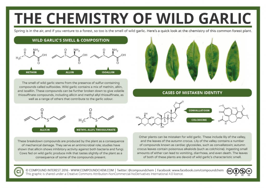 The Chemistry Of Wild Garlic Compound Interest