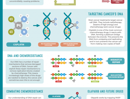 Combating Chemoresistance: Blocking DNA Repair to Fight Cancer