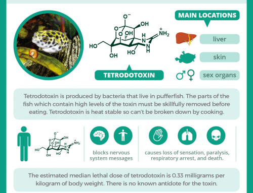 Fugu and tetrodotoxin: how the pufferfish can kill