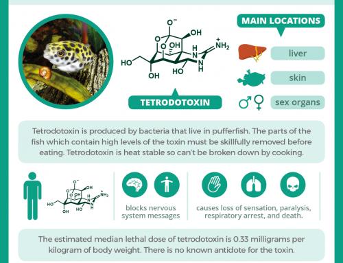 Fugu and tetrodotoxin: how the pufferfish can kill