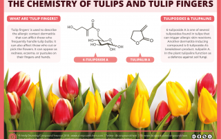 Chemistry of tulips and tulip fingers