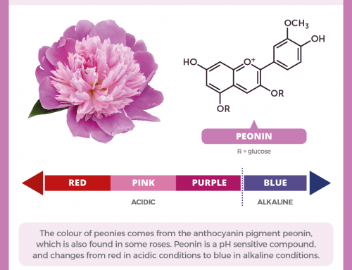 Peonin and the colour of peonies