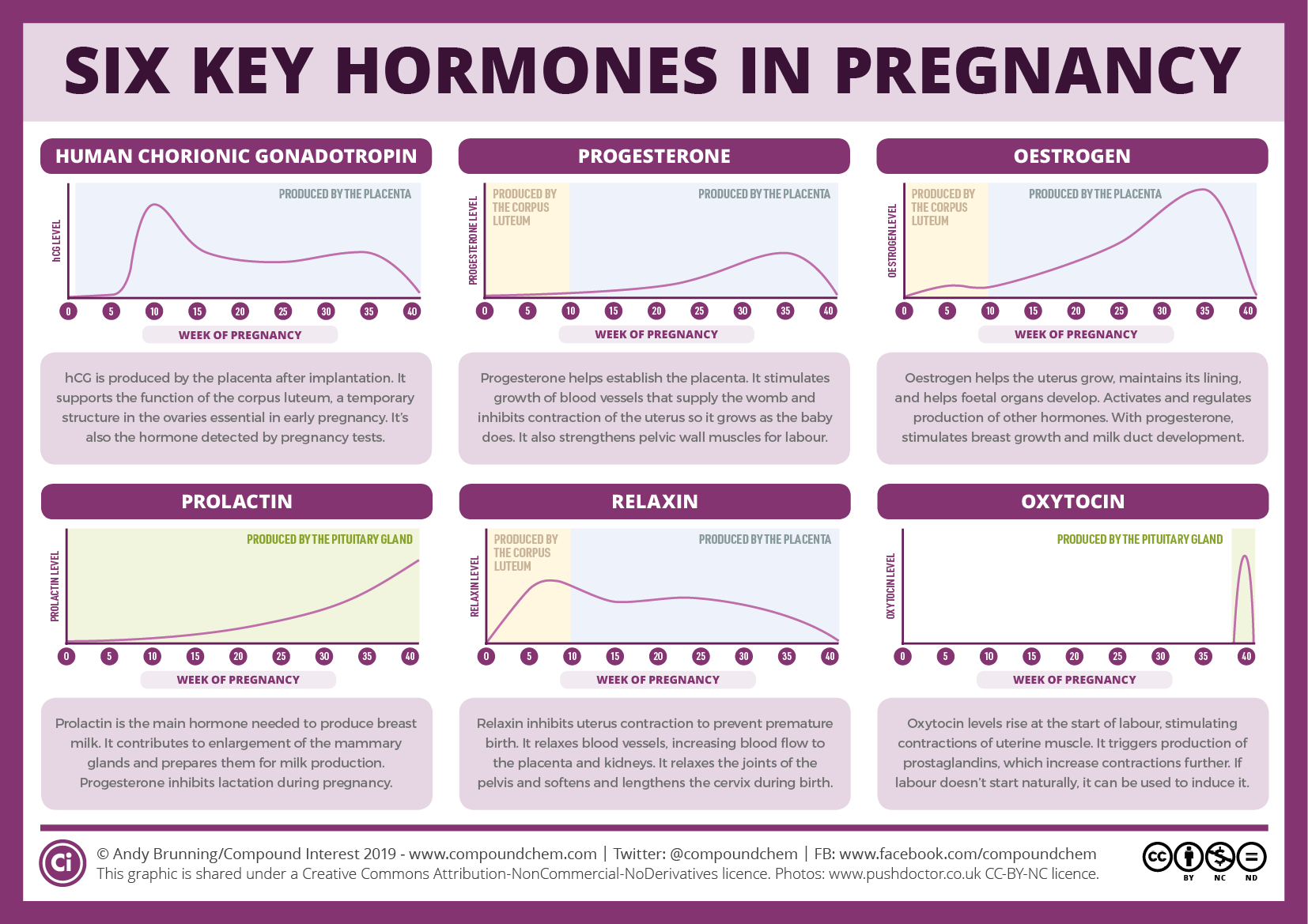 Six key pregnancy hormones and their roles